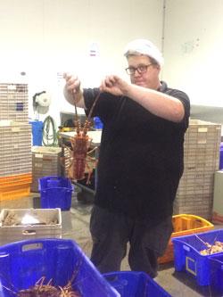Ferguson Australia Lobster Fisheries Firex Industrial Pans